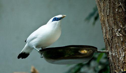 bird eat zoo