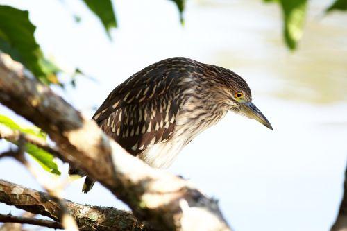 bird kingfisher fish eater