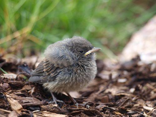 bird animal hatched