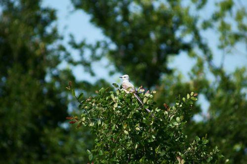 bird birding nature