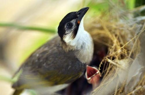 bird nest life