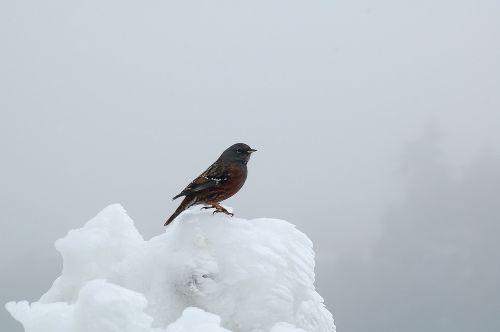 bird snow animal