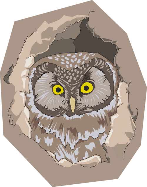 bird hole nature