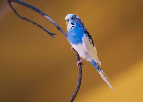 bird nature wildlife