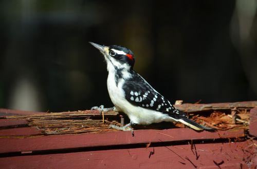 bird québec ornithology