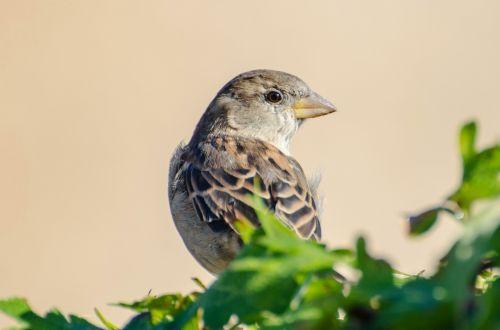 paukštis, gyvūnas, aviatorius, vasara, ruduo, gamta, fonas & nbsp, & nbsp, pavasaris, sezonai, lapai, žalias, filialas, paukštis