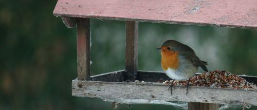 bird feed compound board