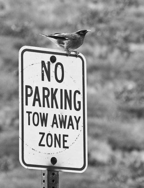 bird perch sign
