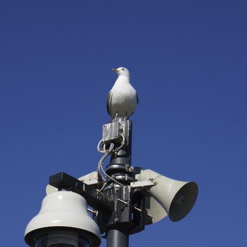bird seagull speaker