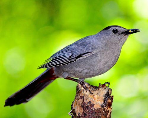 bird nature outdoors