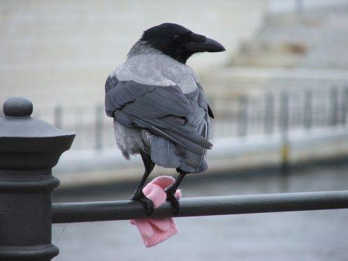 bird berlin glove