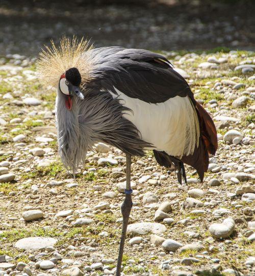 bird crane inch zoo