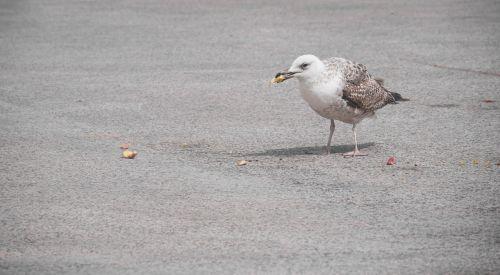 bird food eat
