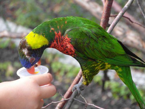 paukštis,maitinti,papūga,rašiklis