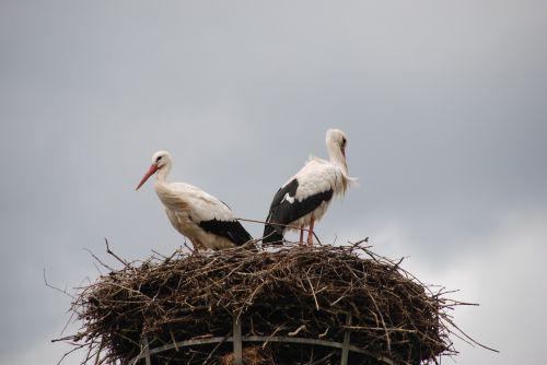 bird stork nest