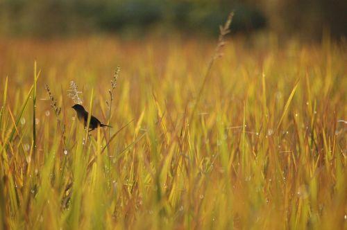 bird morning nature