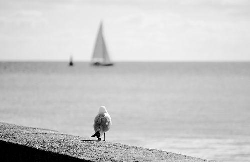 bird fauna horizon