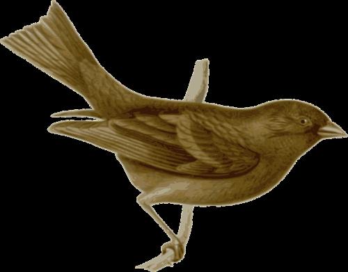 bird feathers animal