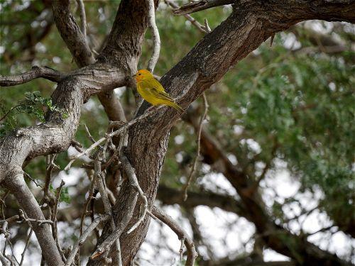 bird nature feathers