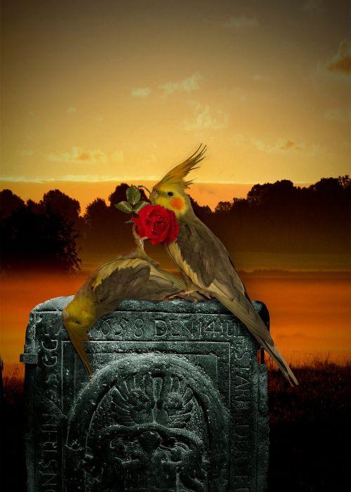 bird death died