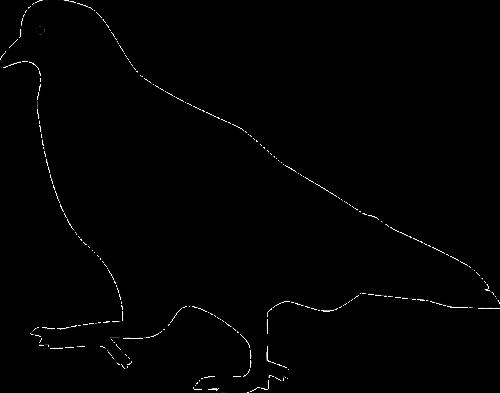 bird pigeon silhouette