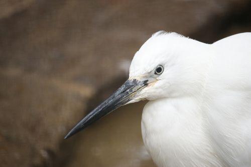 bird white water