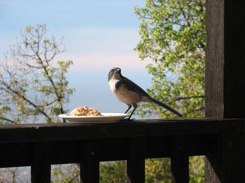 bird porch fence