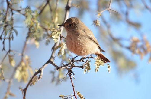 bird sunny friendly