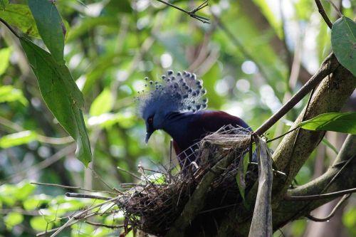 bird nest blue