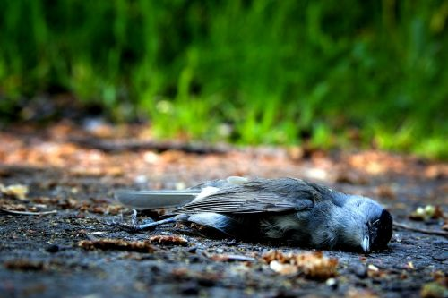 bird death die