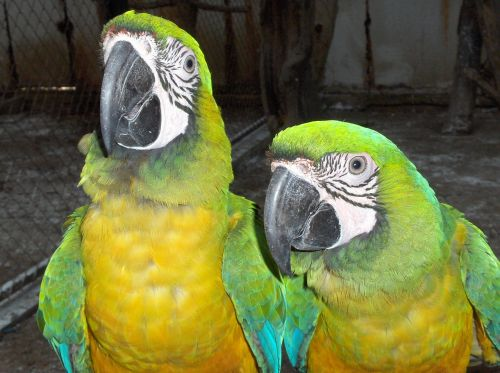 bird tropical animal