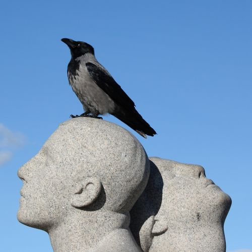 Norvegija,oslo,vigeland parkas,skulptūra,parkas,varna,paukštis,natūralus