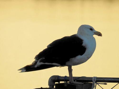 bird sea lake