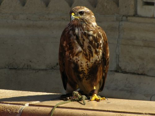 bird falcon places of interest