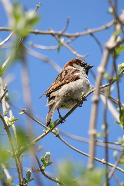 bird house sparrow animals