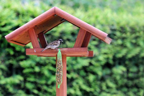 bird bird seed nature