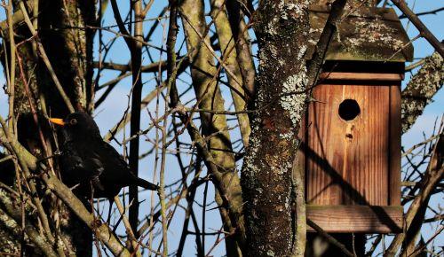 bird black bird blackbird