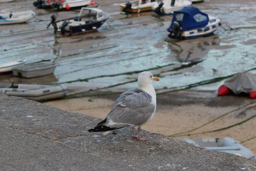 bird sea gulf