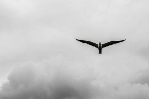 bird cloud himmel