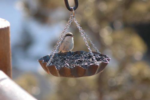 bird finch feeder