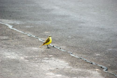 bird road asphalt