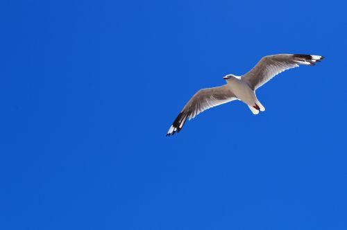 bird blue sky clear sky