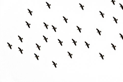 bird sky flight