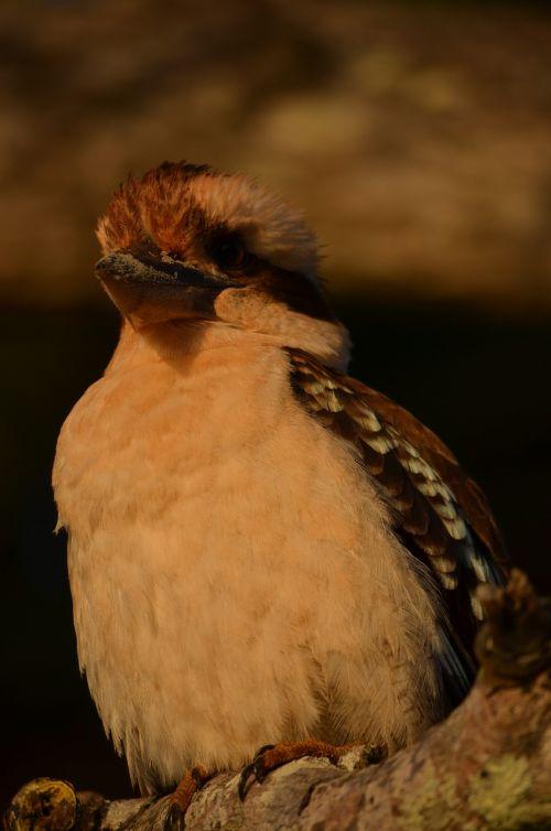 bird wild feathers