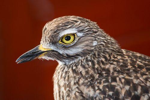 bird feathers beady eye