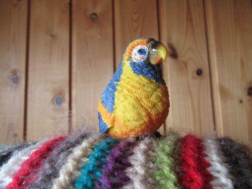 bird rainbow bird rainbow