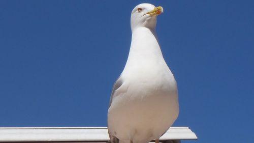 bird seagull profile