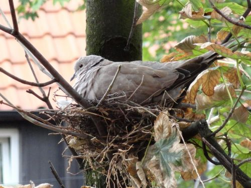 bird young socket