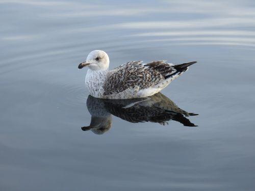 bird seagull marine life