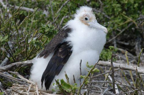 bird galapagos island